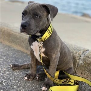 Off-White Yellow logo dog collar & leash N…